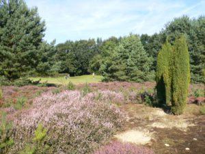 Die Heide gab dem Platz den Namen